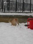 Cayenne corre nella neve