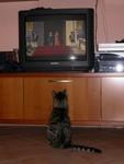 Quando arriva il gatto con gli stivali?