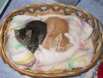 Tutti e tre nella cesta