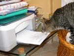C'è un topo nella stampante?