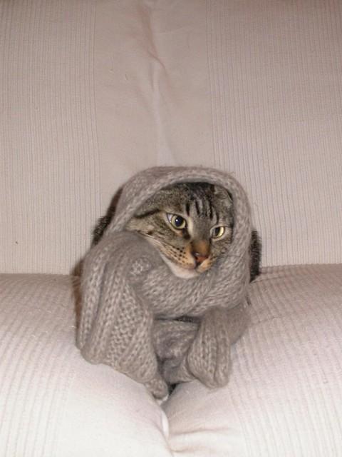 Che freddo!