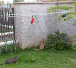 Gatti vincolati
