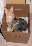 In scatola