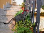 Mescal in giardino con l'imbrago